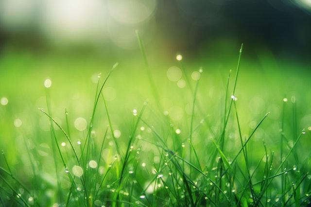 Grönt gräs-Tips-
